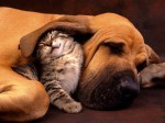 cats vs dogs 150x112 How To Choose The Right Pet: Dog Vs. Cat