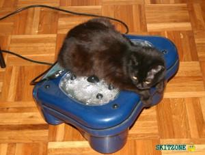 Cat foot massage