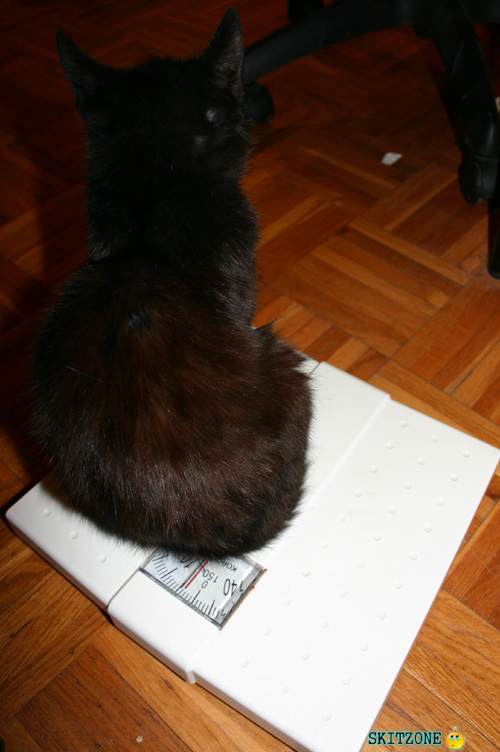 Cat checking weight