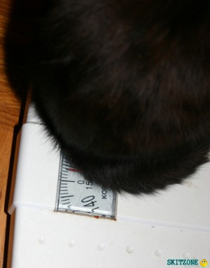 Cat check weight