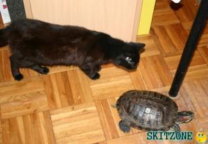 Cat & Tourtle