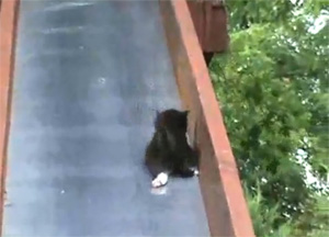 Kittens Falling Down Slide