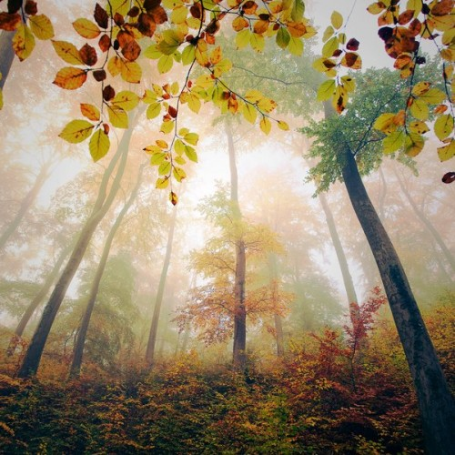 Highness by aL baum 500x500 Most Beautiful Nature Photography
