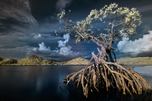 In Solitude IR by gidferrer 630x418 500x331 Most Beautiful Nature Photography