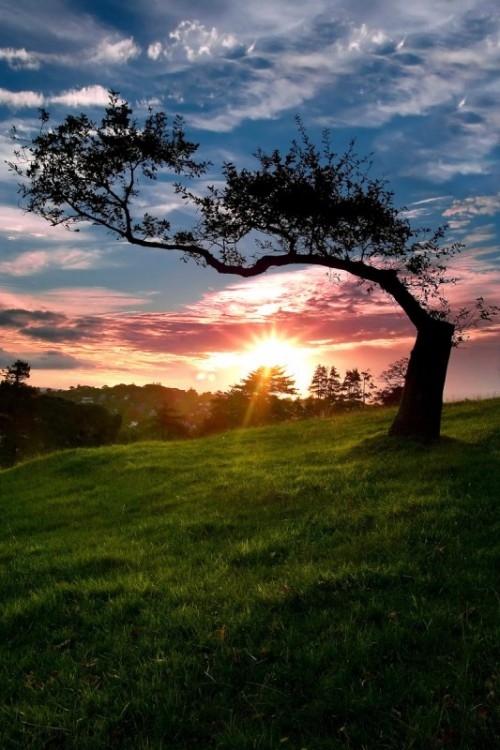 Lone Tree by chrisgin 533x800 500x750 Most Beautiful Nature Photography