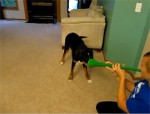 dogs vs vuvuzela