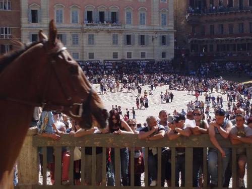 palio race08 Sienas Palio Horse Race