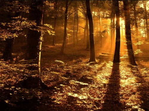 Autumn Forest in the Sunset