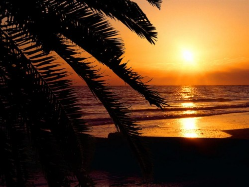 sunset and palm tree