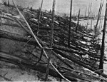 tunguska event fallen trees 150x115 Mystery of Tunguska Event Solved
