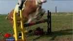 Girl Teaches Cow to Jump