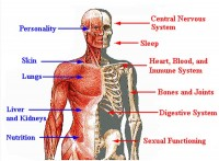 human body 200x147 Six Weird and Wonderful Facts About the Human Body