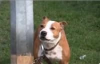 Della the talking dog - Video