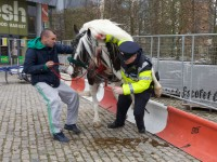 When a horse took fuck the police a bit too literally