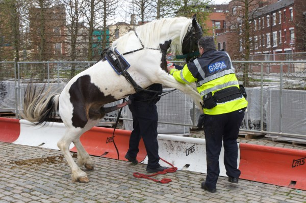horse police04 600x399 When a horse took 'fuck the police' a bit too literally