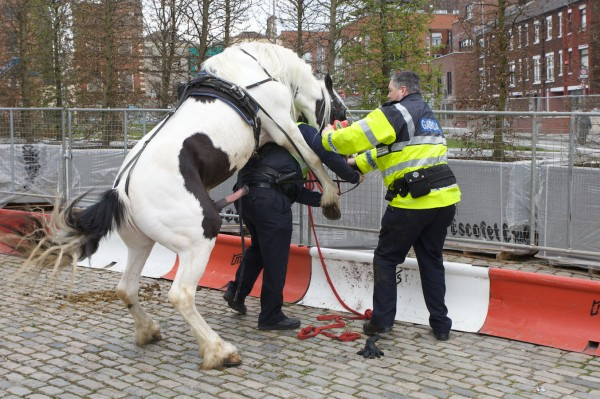horse police05 600x399 When a horse took 'fuck the police' a bit too literally