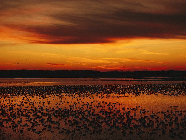 Sunset with Snow Geese, Missouri