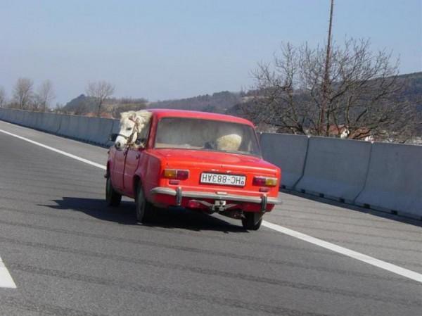 Funny Ferrari