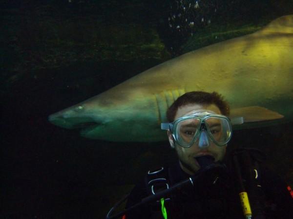 Shark Diving, Sydney