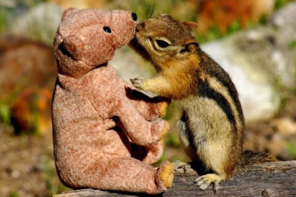 Squirrel in love with teddy bear