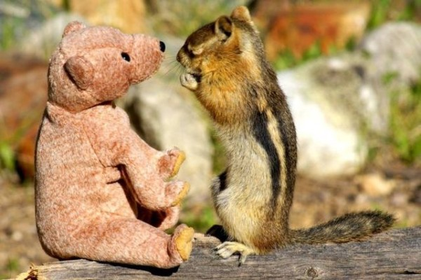 Squirrel in love with teddy bear06 600x400 Squirrel fell in love with teddy bear