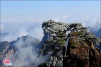 Beautiful rime in Mt. Huangshan, China