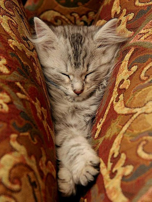 Sweet Dreams - Kitties