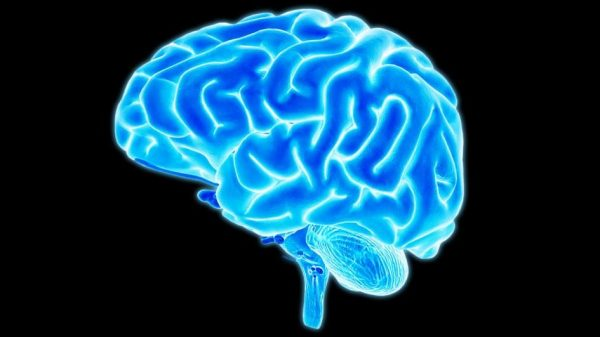 Five Incredible Facts About The Human Brain And How It Works