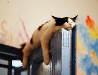 Sweet Dreams – Kitties