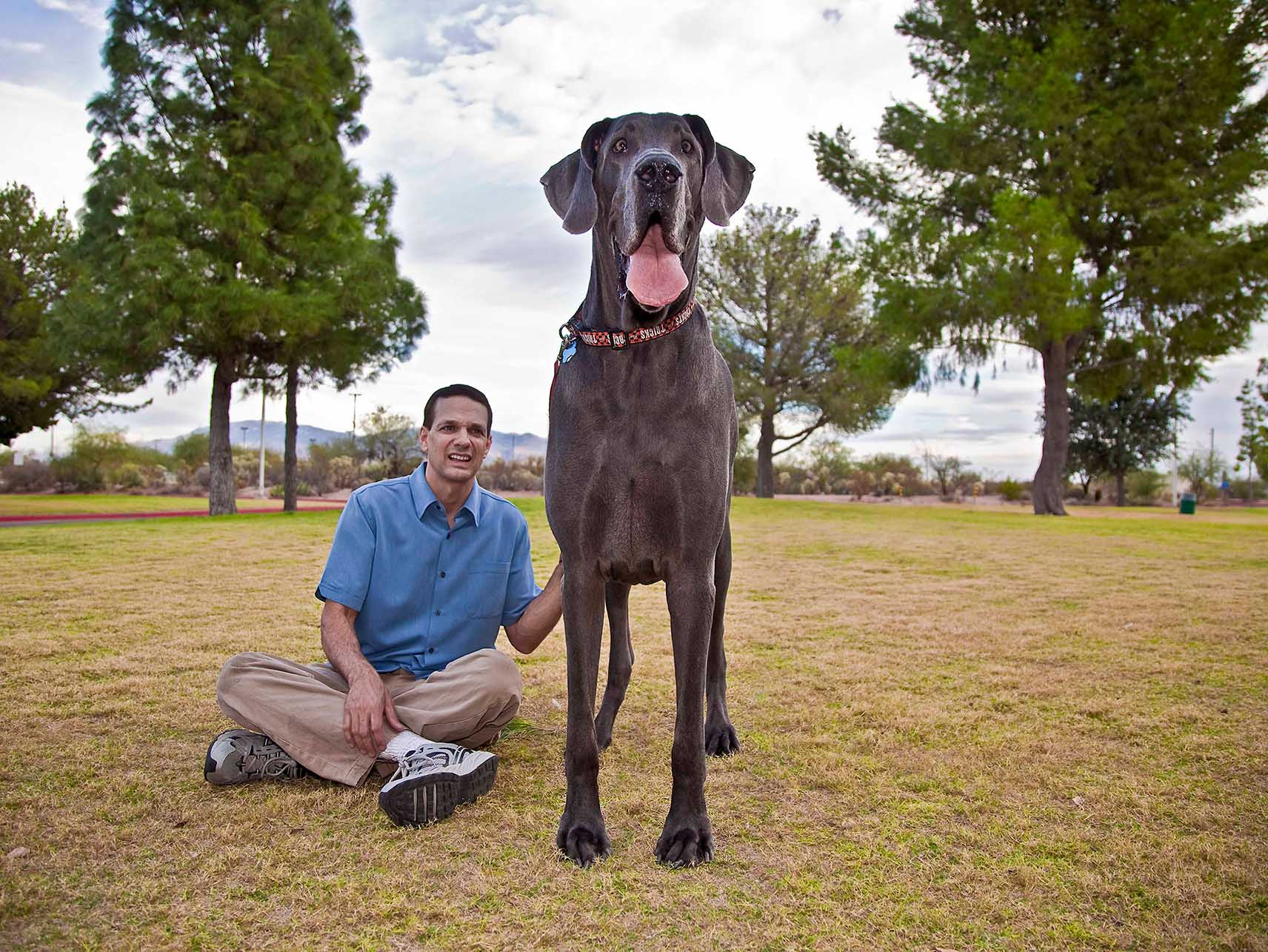 Giant George - Tallest Dog Ever & Tallest Living Dog