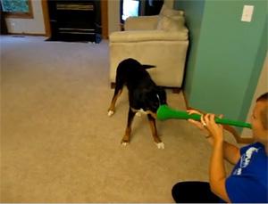 dogs vs vuvuzela