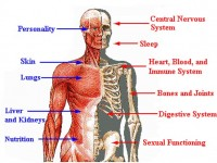 Six Weird and Wonderful Facts About the Human Body