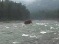 Living Mammoth spotted in Siberia