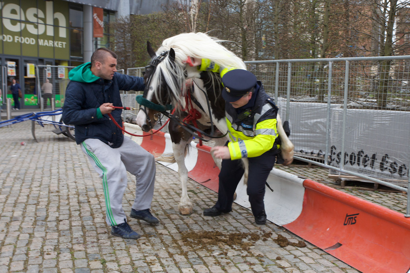 When a horse took 'fuck the police' a bit too literally