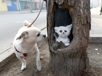 Arts in tree holes